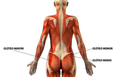 Musculos Gluteos