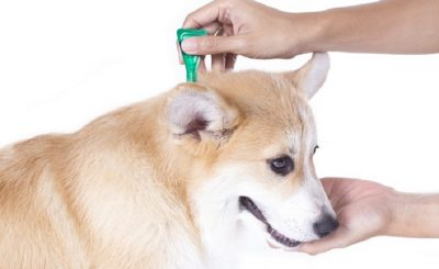 Mantener Sanos a los Perros