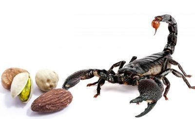 Picadura de escorpion