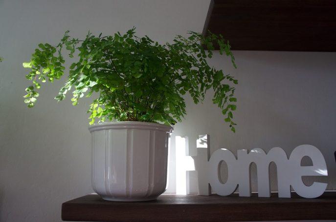 Decorar los Espacios de Hogar con Plantas