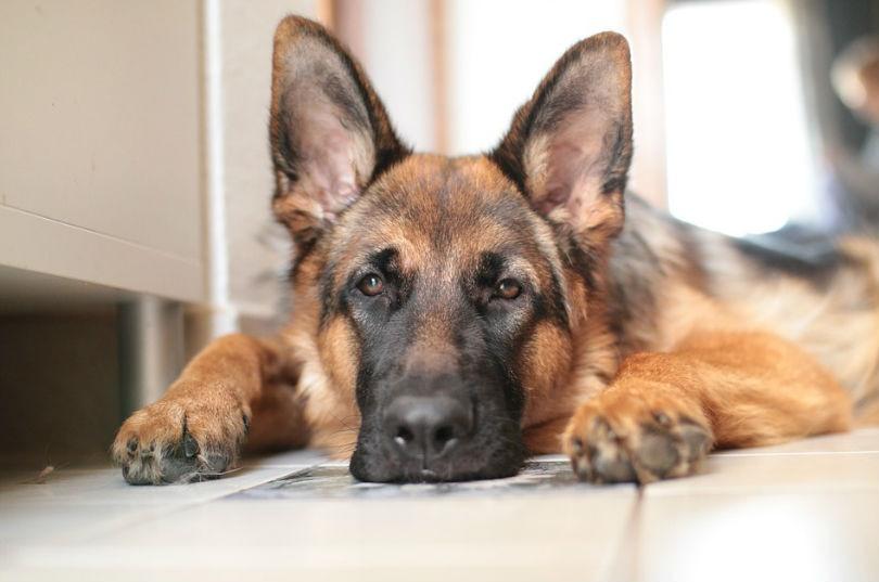 Cu les son las mejores mascotas para tener en casa aedn - Perros para tener en casa ...