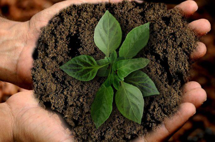 Propuestas en busca de la sostenibilidad