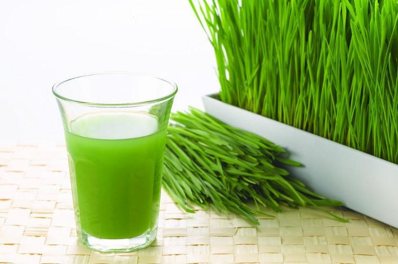 Beneficios de la hierba de trigo