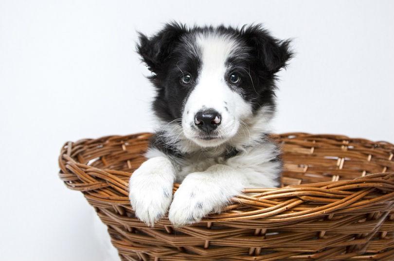 adoptar a un cachorro de perro