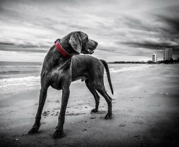 Sesión de mascotas y paseo de perros