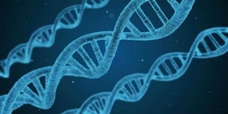 pruebas geneticas