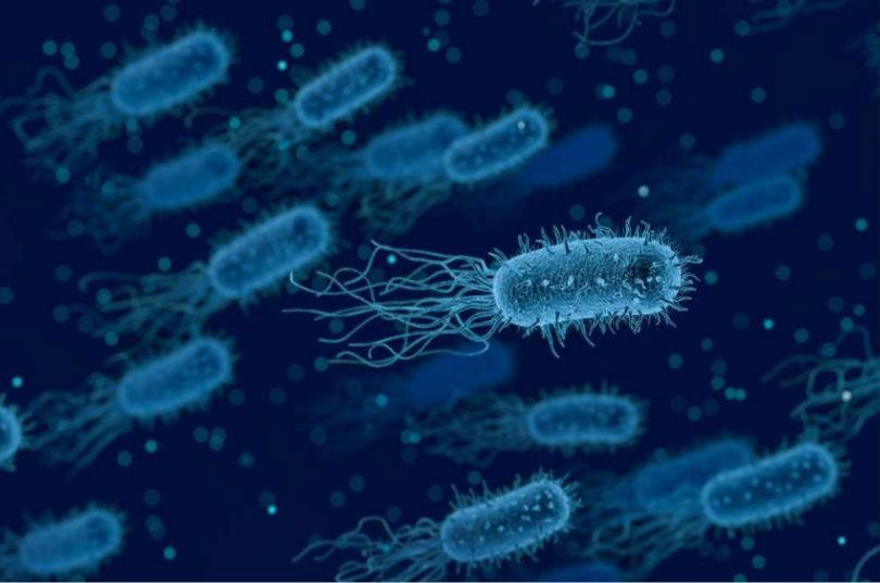 Higiene en la prevención de la listeriosis