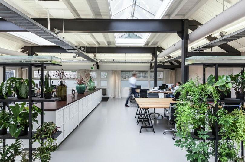 beneficios que aportan las plantas en las oficinas
