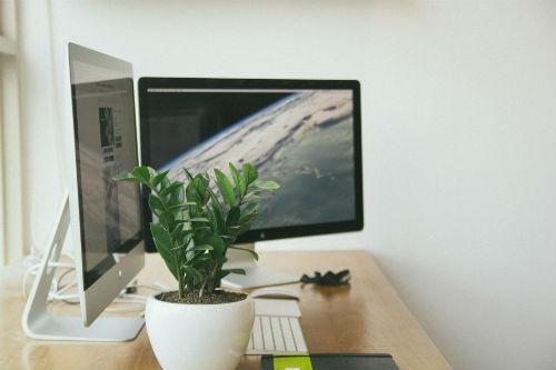 las plantas pueden aumentar la productividad