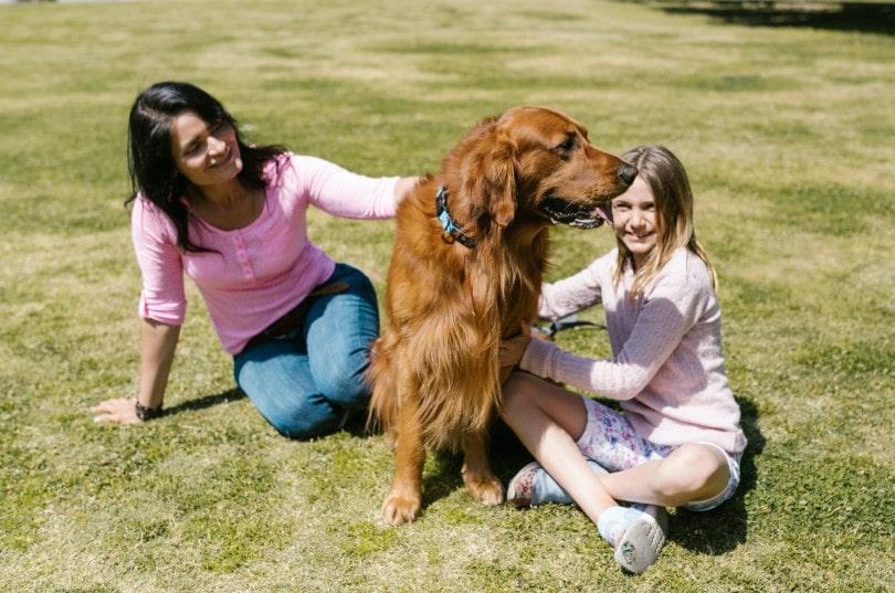 Diferencias perro grande o pequeño